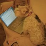 Even Sherri, Ann's dog, uses the Mac